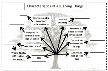 8 Characteristics of Life Tree Graphic Organizer by