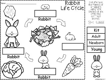 A+ Rabbit Life Cycle Labeling & Word Wall by Regina Davis