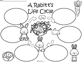 Rabbit Life Cycle Diagram Pictures to Pin on Pinterest