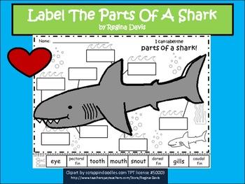 dogfish shark diagram with labels alpine ktp 445 wiring regina davis teaching resources | teachers pay
