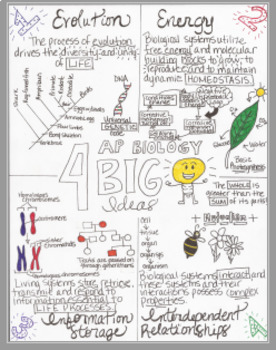 AP Biology 4 Big Ideas Sketch Doodle Notes by Stacey's