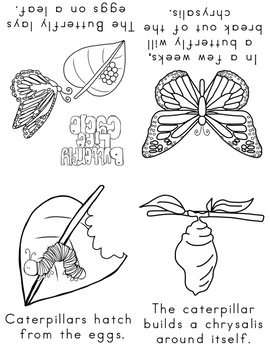 All About Butterflies Lesson Plan for Preschool, PreK, K