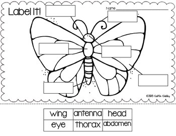 Insects: Math, Literacy, and SO Much More! (Aligned to