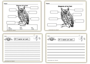 All About Owls, Writing Prompts, Graphic Organizers
