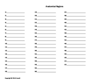Anatomical Regions Quiz or Worksheet by Everything Science