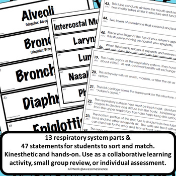 Anatomy and Physiology Structure & Function Card Sorts
