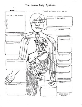 Amazing Life Science Crossword Body Systems Worksheet