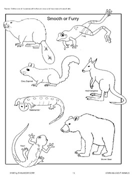 Animal Body Coverings by Evan-Moor Educational Publishers