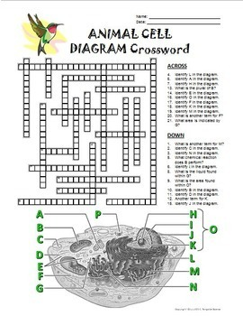 Animal Cell Crossword with Diagram {Editable} by Tangstar