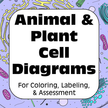 animal cell diagram and labels lutron diva dimmer wiring plant cells diagrams for matching labeling