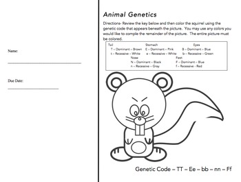 Animal Genetics Worksheet (Genotype & Phenotype Practice