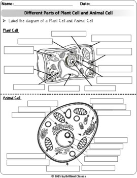 Animal/Plant Cell: Labeling, Venn diagram, Cell Parts