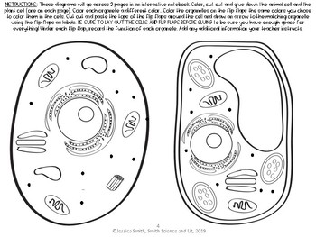 Animal and Plant Cells + Organelles Reading Comprehension