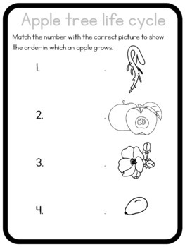 Apple tree life cycle circle time questions by Little Blue