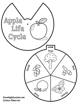 Apple Life Cycle Printable Craft by Green Apple Lessons
