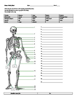 BONES WORKSHEET W/ANSWERS by DON THOMSENS MAGIC BEAUTIFUL