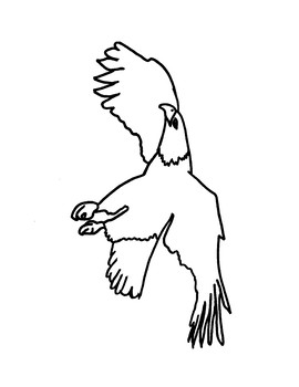 Bald Eagle Coloring Page Worksheets Teaching Resources Tpt