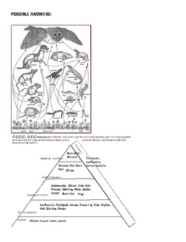 Barn Owl Food Web & Energy Pyramid- works with Owl Pellets