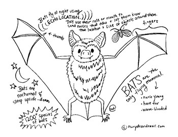 Bat Facts Printable Science or Animal Study Coloring Page