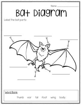 Little Brown Bat Diagram Muskox Diagram Wiring Diagram