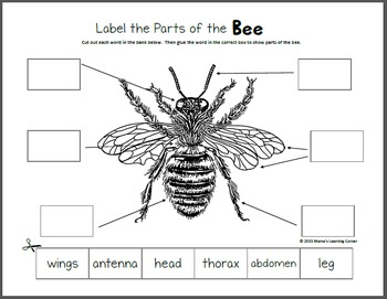 Beautiful Preschool Printables Bee Lifecycle For The Kids