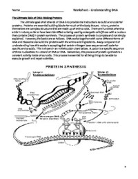 High School Biology Worksheet - Understanding DNA by ...