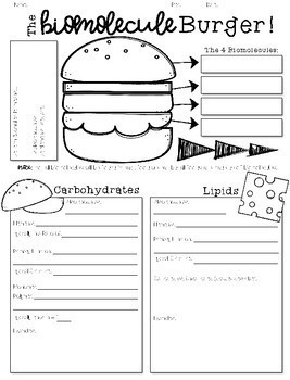 Biomolecule Burger Handout Ready To Use Notes Assessment