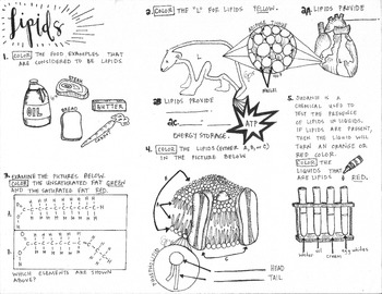 Biomolecules: Lipids coloring sheet by Scientifically