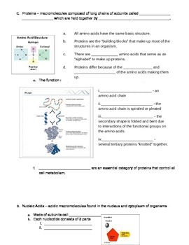 Biomolecules Worksheet By A Really Great Teacher