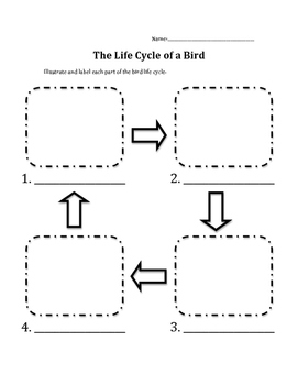 bird life cycle diagram electric heat pump wiring by heather halseth teachers pay