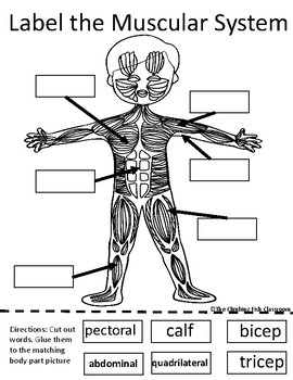 Body Systems Cut and Paste Worksheets by The Climbing Fish