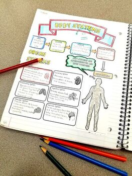 Human Body Systems Graphic Organizer, Quiz, & PPT by Mrs
