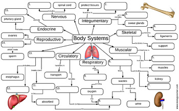 Body Systems Graphic Organizer Answer Key by Biologycorner