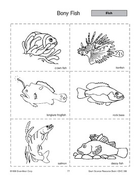 Bony Fish and Salmon Life Cycle by Evan-Moor Educational