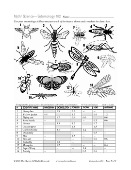 Bug and Insect Math: metric measure & insect