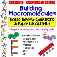 Macromolecule Worksheet High School Coloring