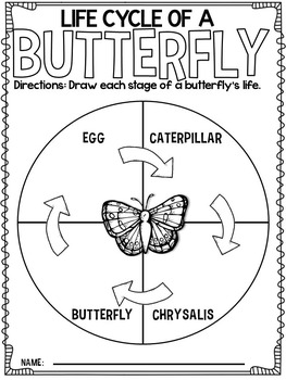 Butterflies {A Complete Nonfiction Resource!} by Lyndsey