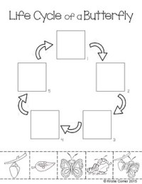 Butterfly Life Cycle Cut and Paste Worksheet by Lemons and ...