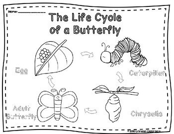 Butterfly Life Cycle Diagram and Worksheets by Crimson