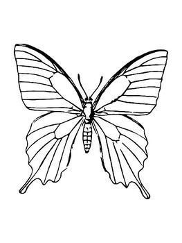 Butterfly Template for Art Project Butterfly Coloring Page