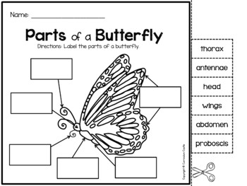 Butterfly and Frog Life Cycle Investigation by Curriculum