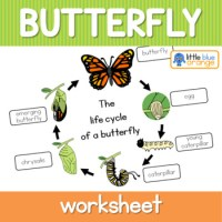 Butterfly life cycle worksheet by Little Blue Orange   TpT
