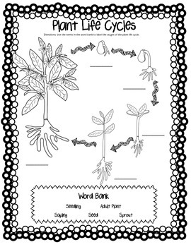 CCSS Aligned Plant Life Cycle & Plant Needs Bundle with