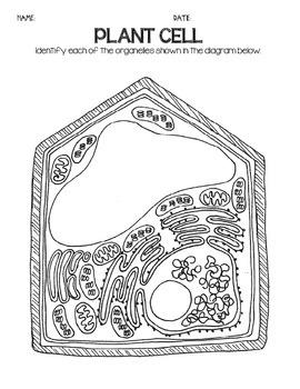 printable blank animal cell diagram feline skeleton cells plant & diagrams: note taking/assessment by iteachstem