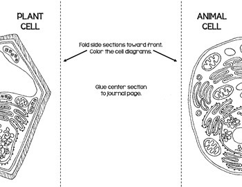 blank animal cell organelles diagram dvc subwoofer wiring cells plant & diagrams: note taking/assessment by iteachstem