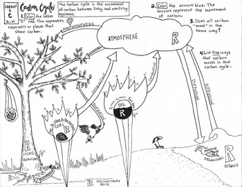 Carbon Cycle Coloring Sheet by Scientifically Speaking is