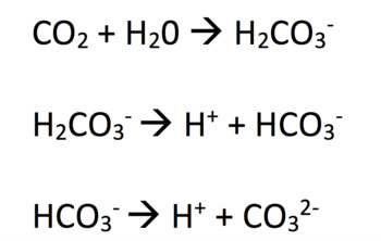 Carbonate Chemistry and Human Impact of Ocean