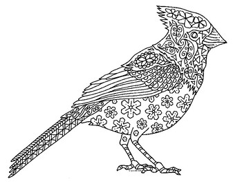 Cardinal Bird Worksheets Teaching Resources Teachers Pay Teachers