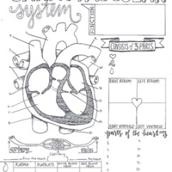 Circulatory System Heart Diagram Worksheet What Is Electrical Wiring Cardiovascular Sketch Notes By Creativity Meets Cognition