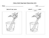 Science Observation Worksheets Teaching Resources